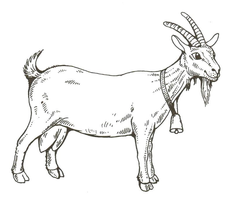 Раскраска Коза. Домашние животные