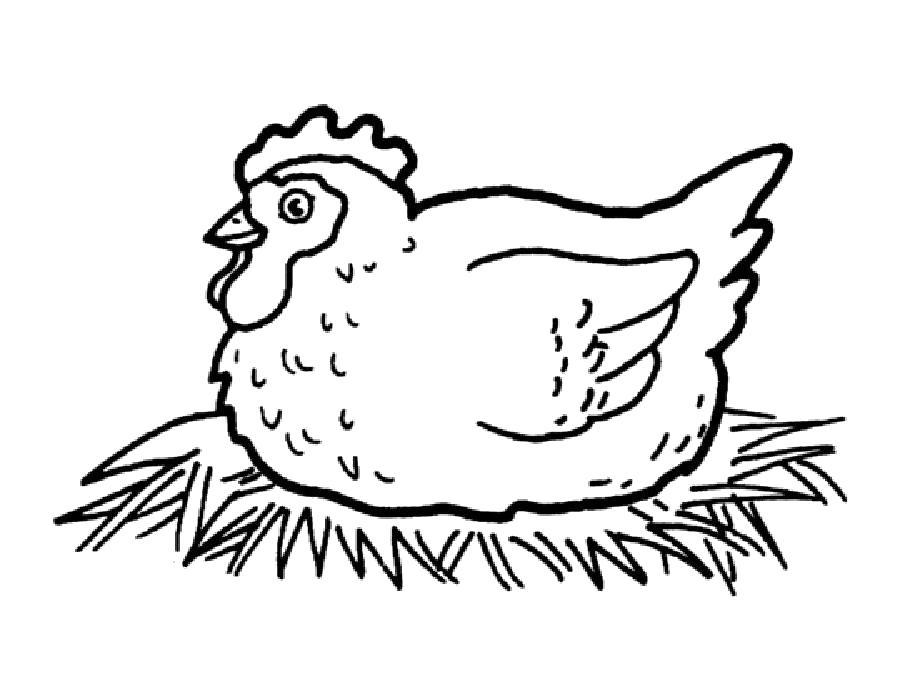 Раскраска Раскраска курица. Домашние животные