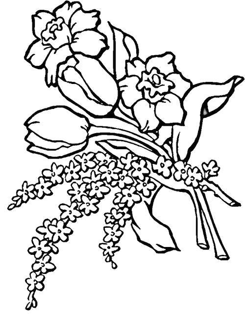 Раскраска  Букет с тюльпанами. Скачать .  Распечатать