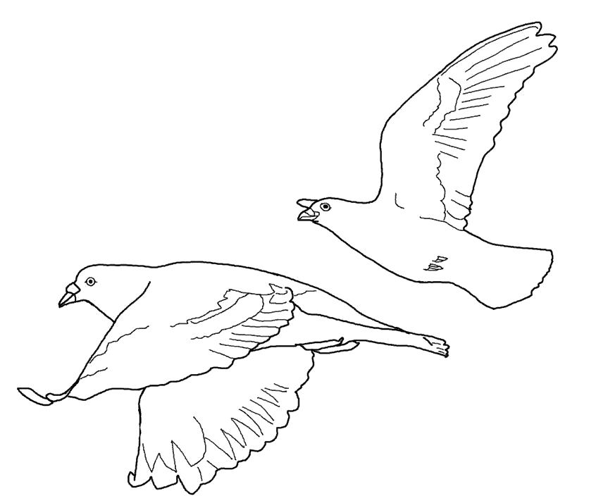 Птицы в полете картинки раскраски