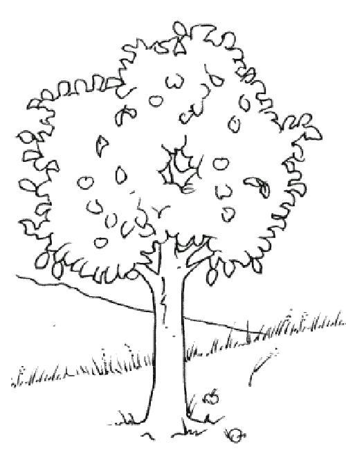 Раскраска Осень  деревья и листья деревьев     распечатать. Скачать дерево.  Распечатать растения