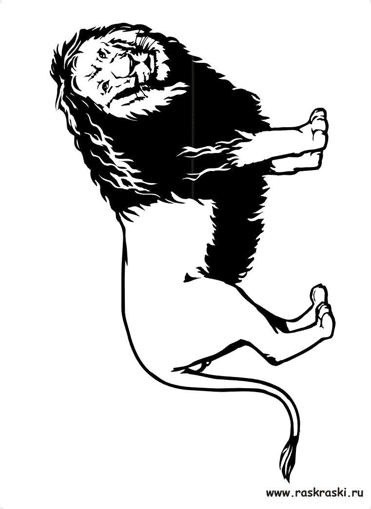 Раскраска раскраски лев. Дикие животные