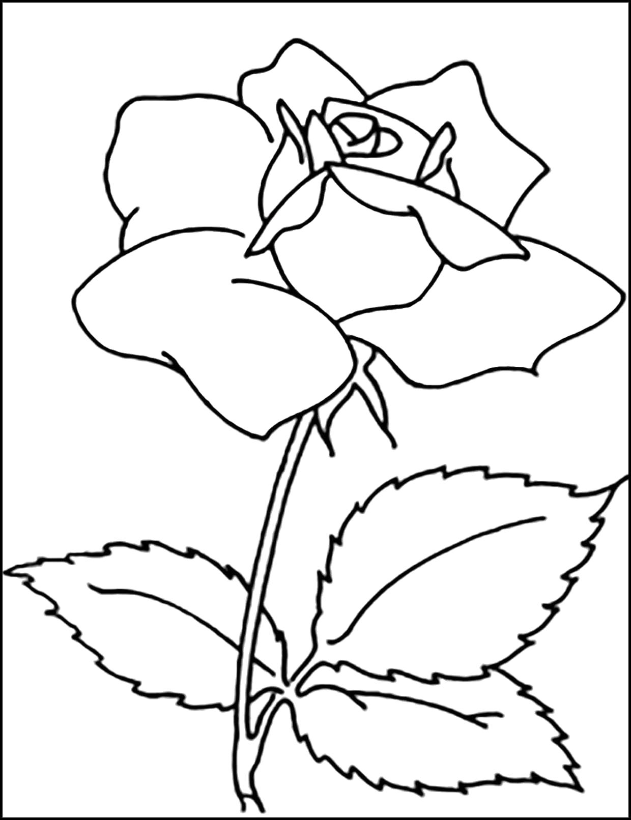 Раскраска  роза. Скачать 8 марта.  Распечатать 8 марта