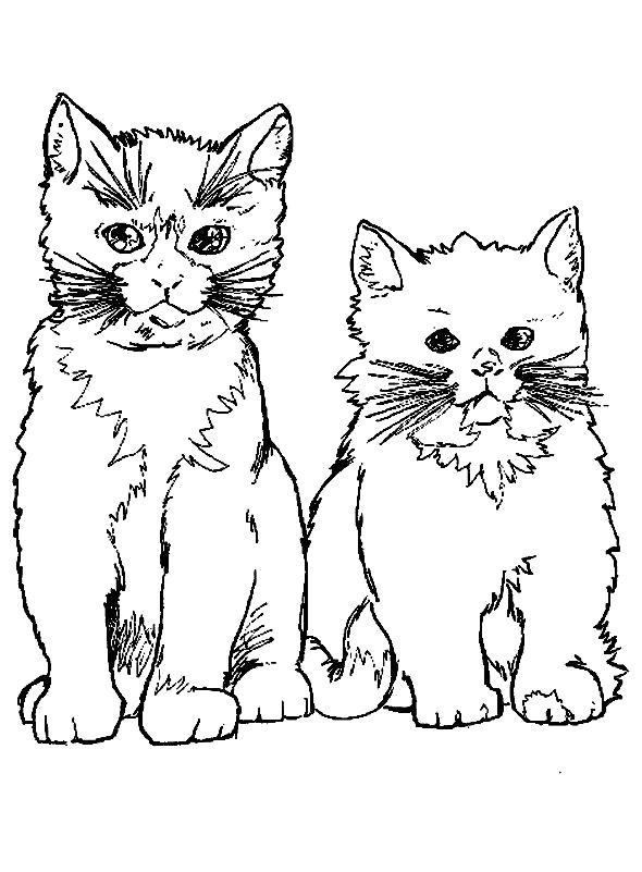Раскраски кошка, Раскраски для скачивания.