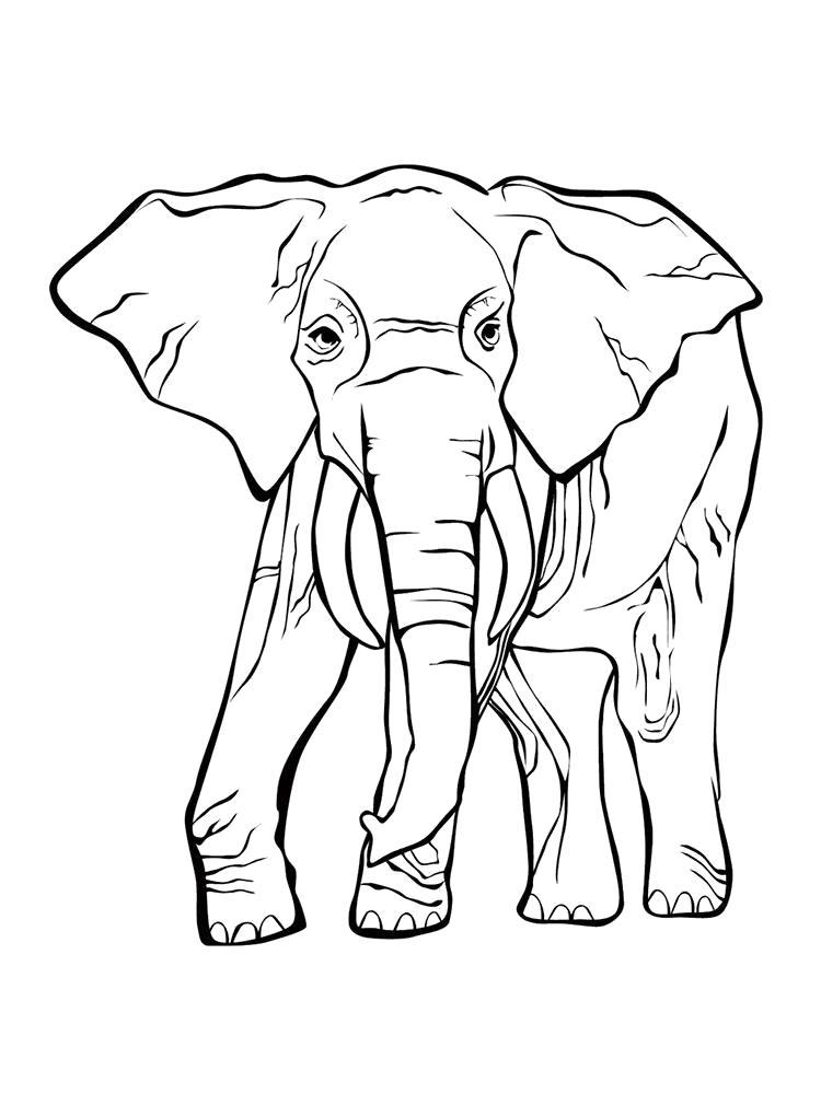 Раскраска Раскраска слон. слон