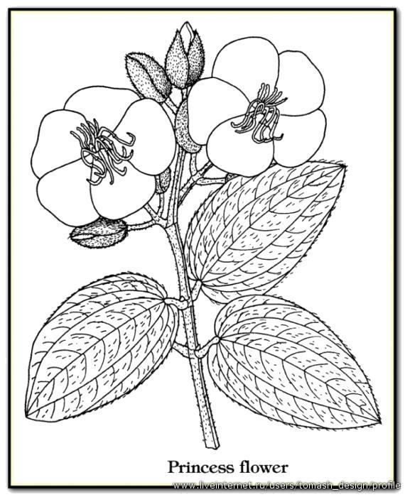 Раскраска Цветы с описаниями.
