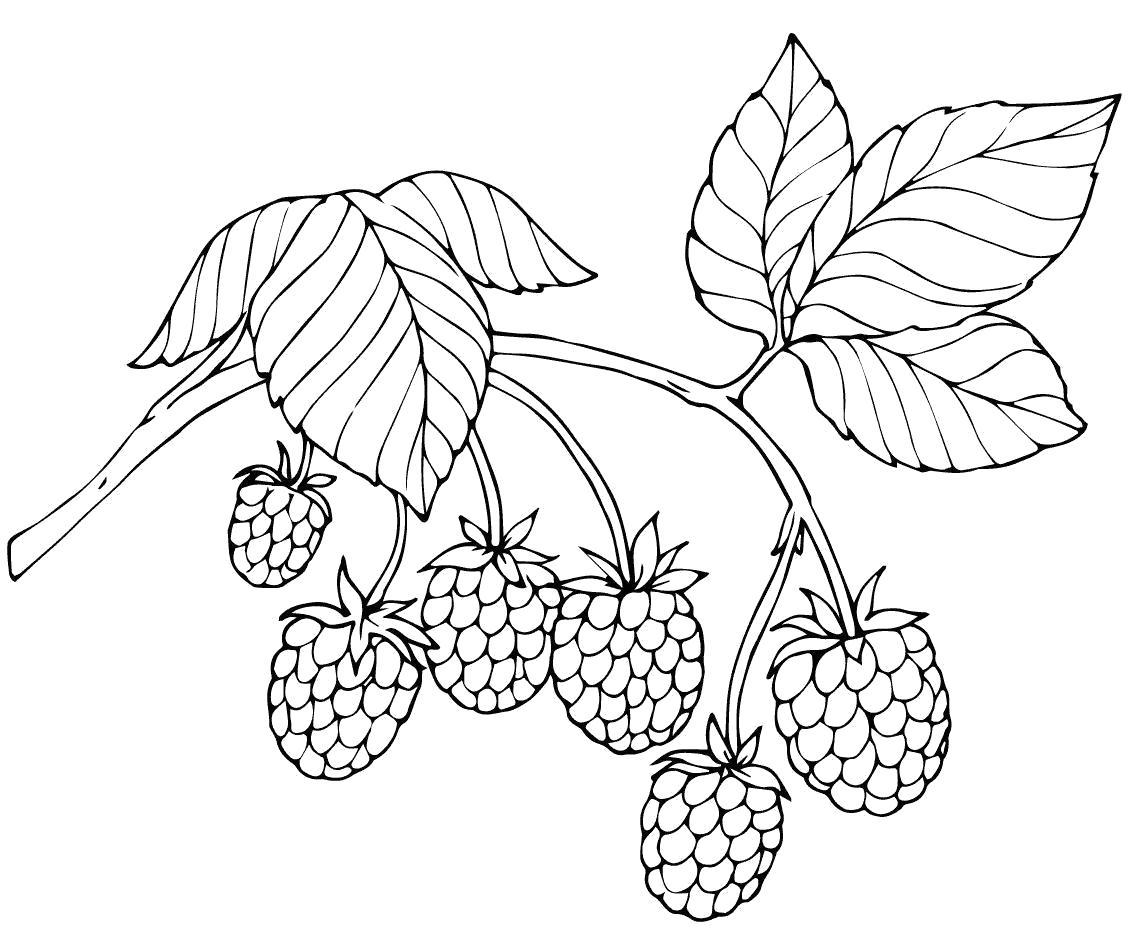 картинки контуры ягоды приказов еще поступало
