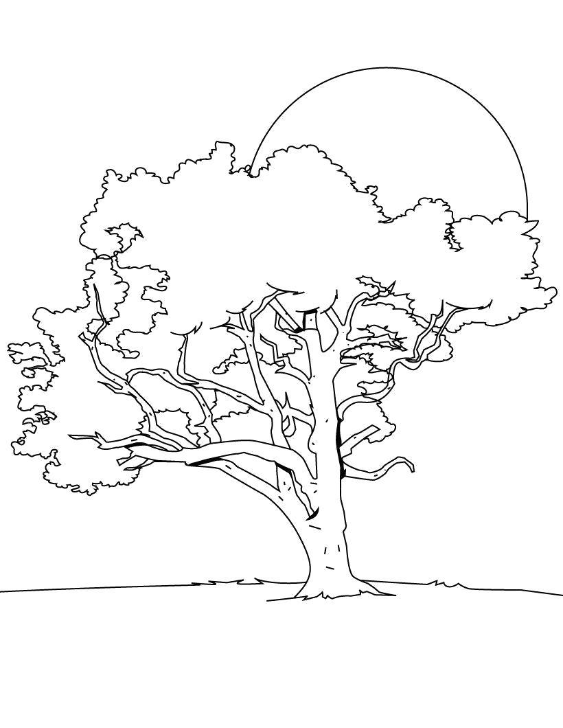 Раскраска Раскраска Дерево. растения