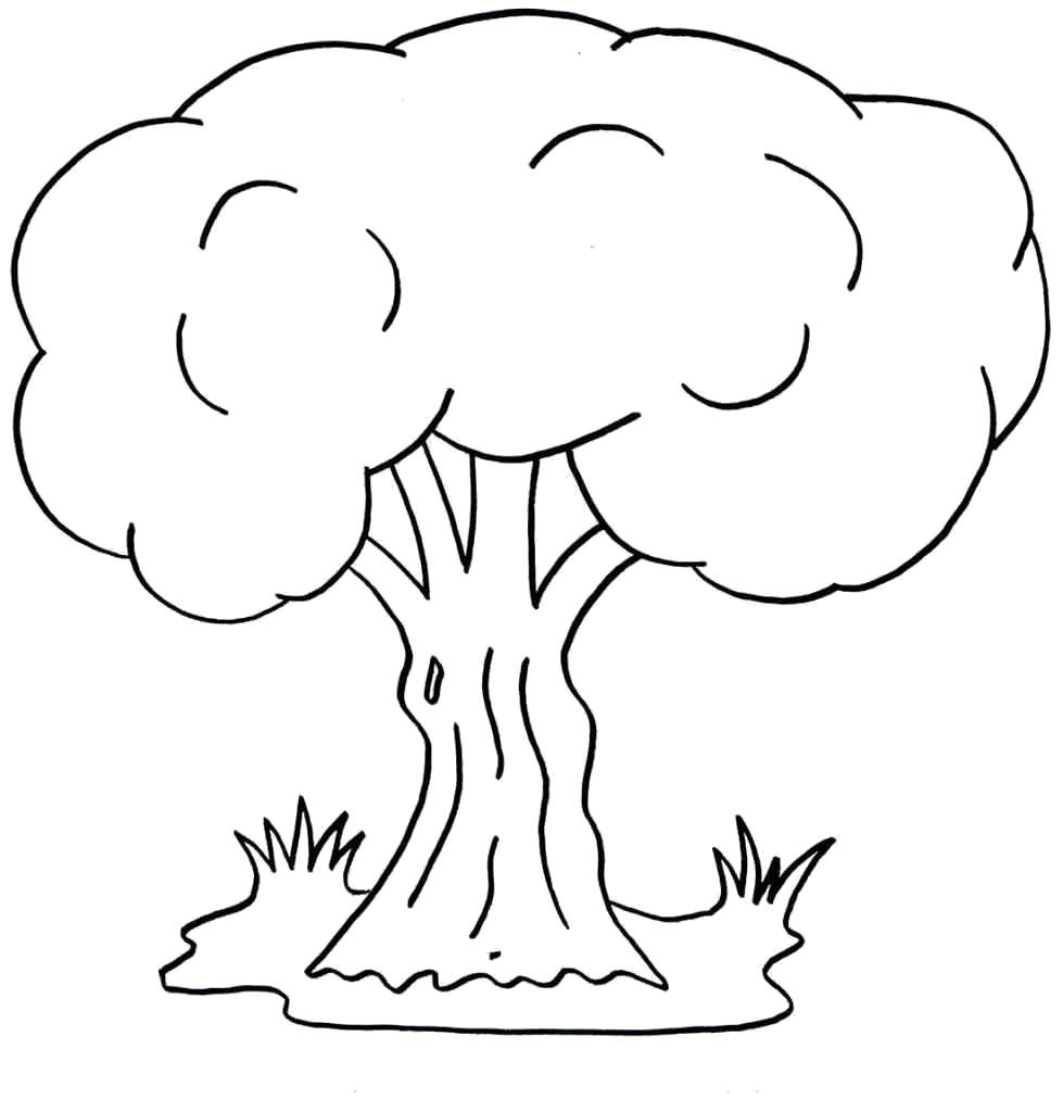 Раскраски дерево, Лучшие раскраски в формате А4.
