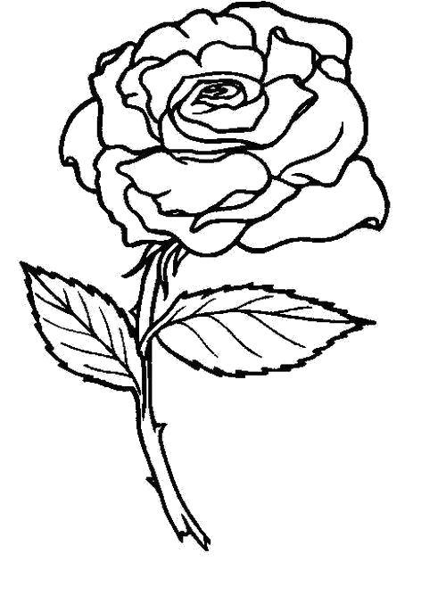 Раскраска  Дикая роза. Скачать Цветы.  Распечатать Цветы