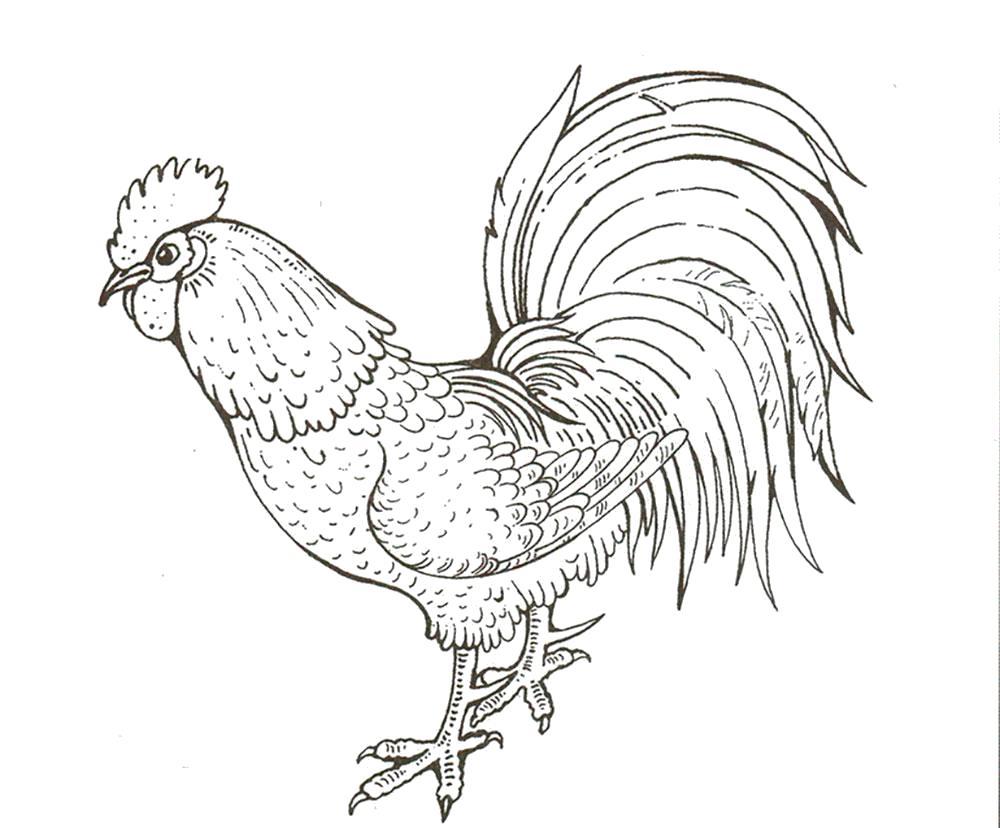 Раскраска Раскраска петух. Домашние животные