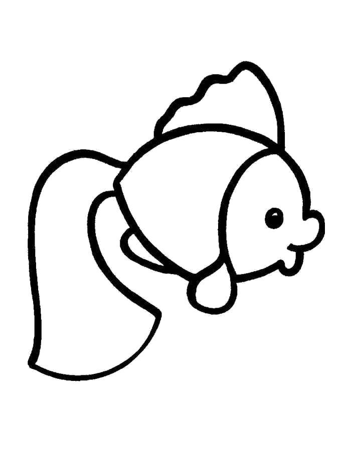 Раскраска Золотая рыбка. Скачать золотая рыбка.  Распечатать золотая рыбка