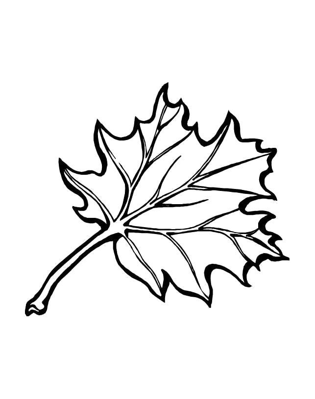 Название: Раскраска раскраска лист дерева. Категория: растения. Теги: лист.