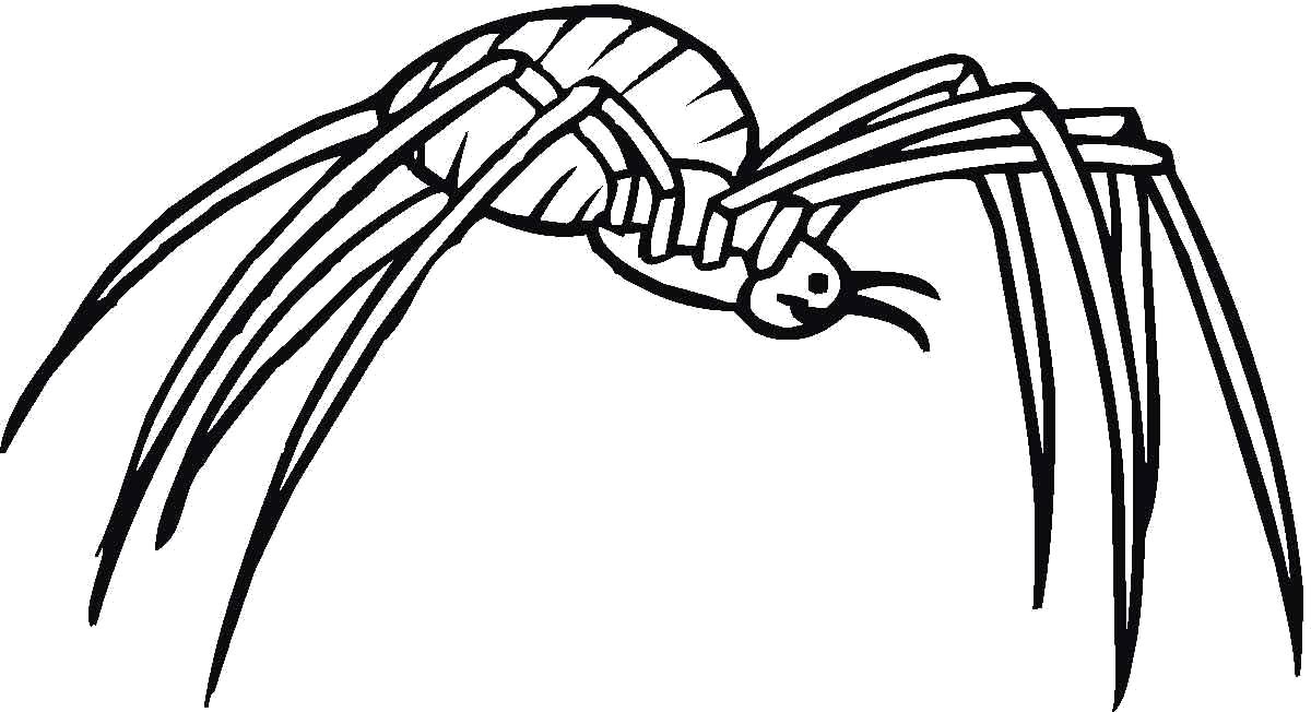 Раскраска насекомое паук