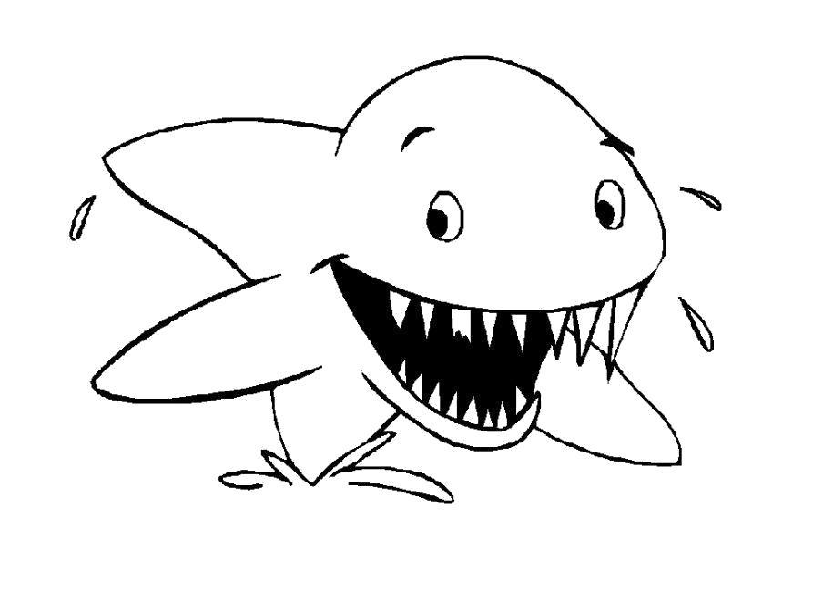 Раскраска Раскраска Акула. Морские животные