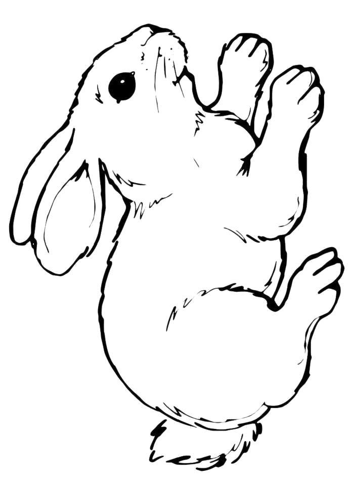 картинка раскраска заяц без ушей коварность известна