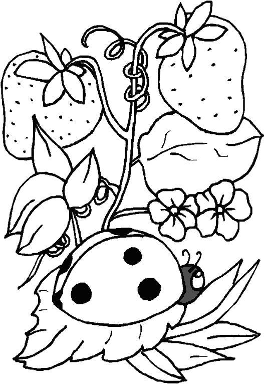 Раскраска Раксраска божья коровка для детей распечать бесплатно. Насекомые