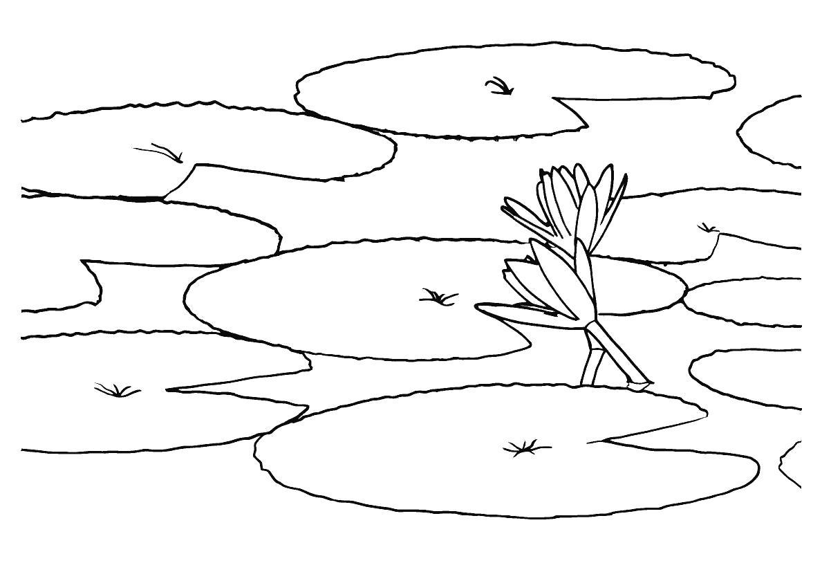 раскраска пруд с кувшинками тогда они могут