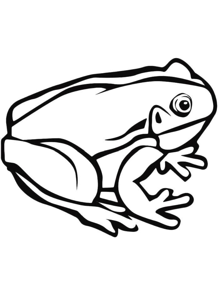 Лягушка картинка раскраска для детей на белом фоне