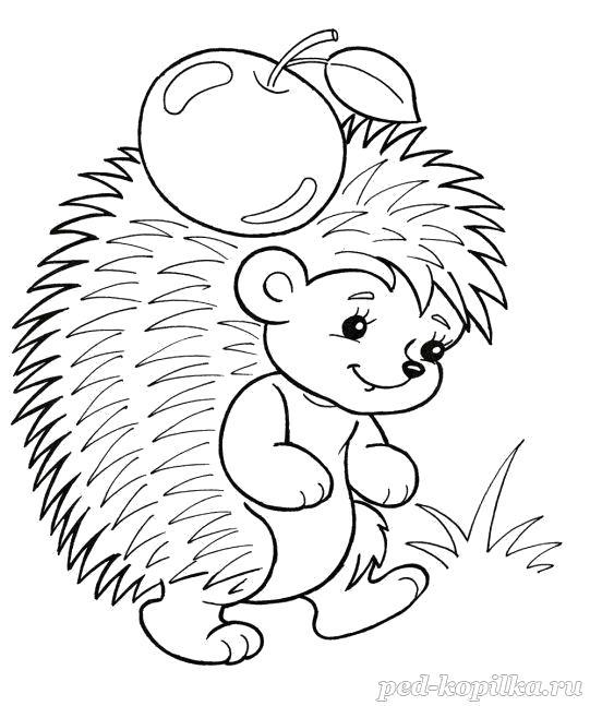 Раскраска  Ёжик с яблоком. Скачать Ежик.  Распечатать Дикие животные