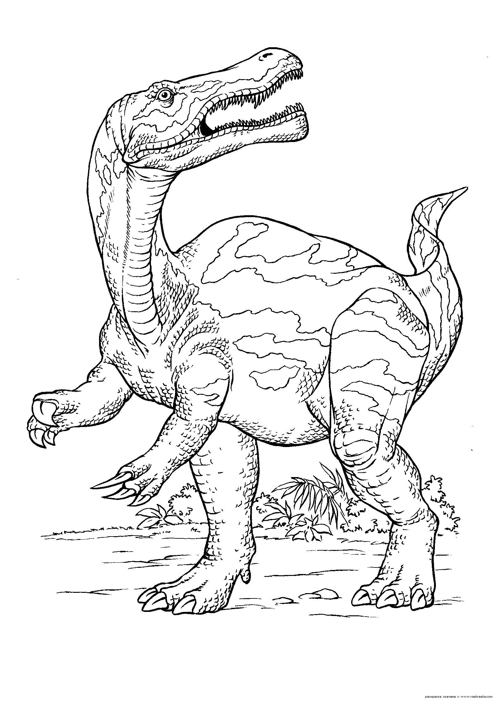 Раскраска Раскраска Динозавр. Раскраска Гигантозавр, раскраски динозавтров бесплатно для ребенка. динозавр