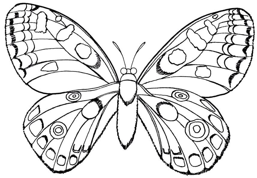 Раскраска Бабочка . Насекомые