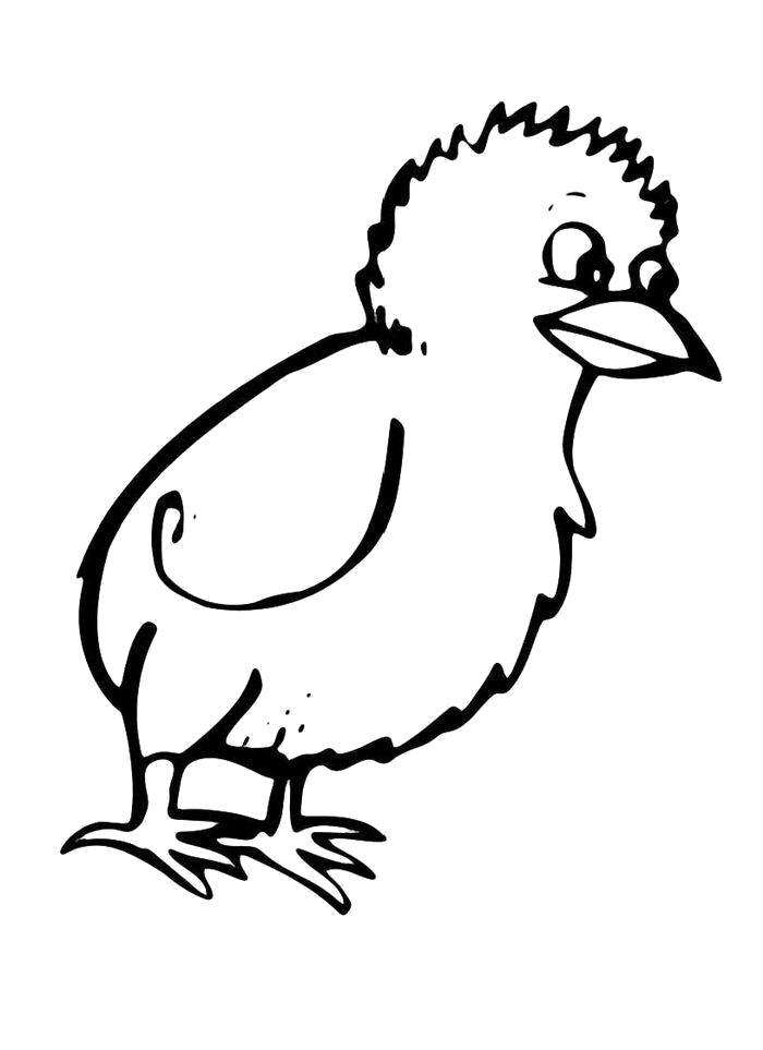 Раскраска  Маленький цыпленок. Домашние животные
