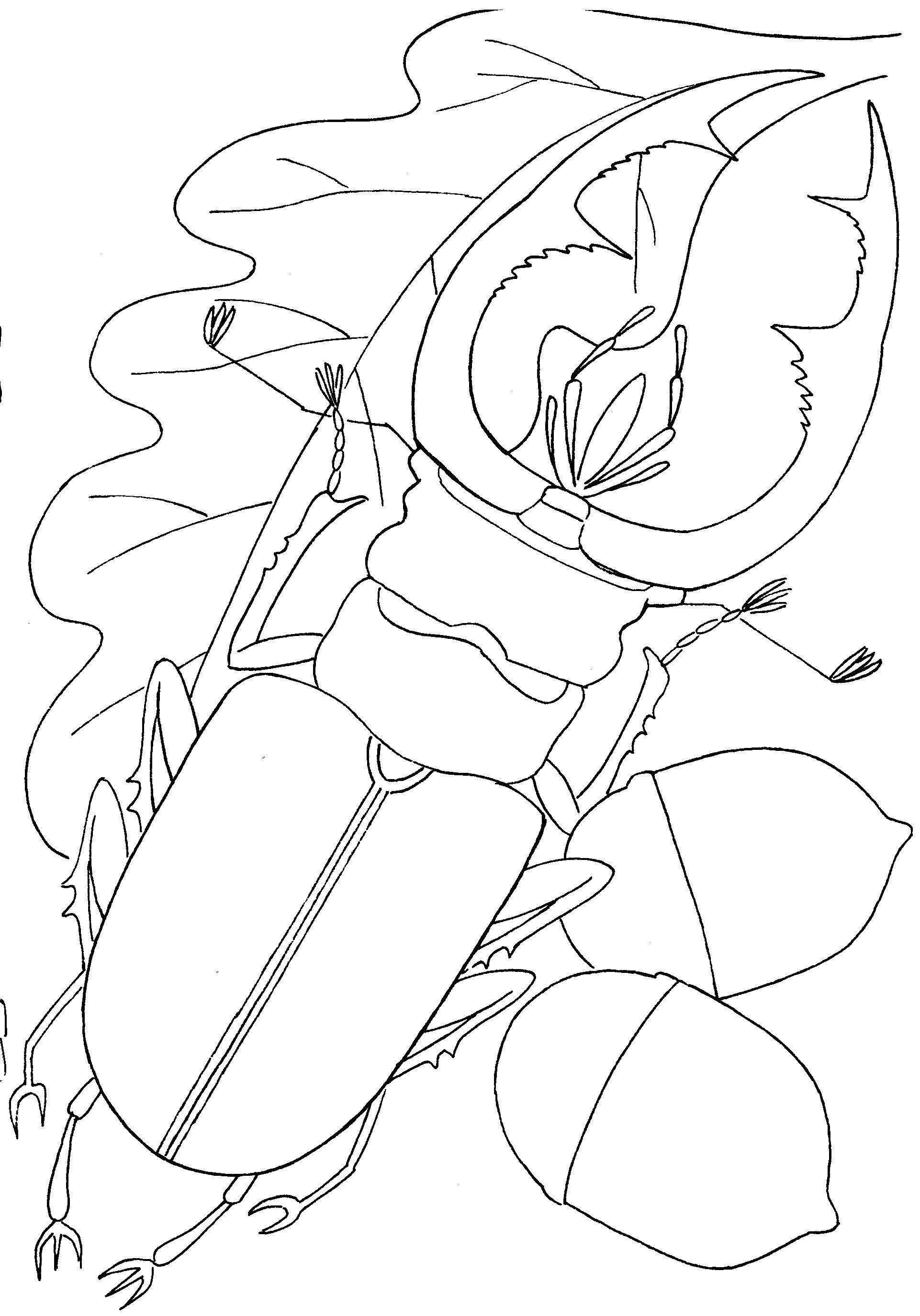 раскраска жук носорог распечатать правила
