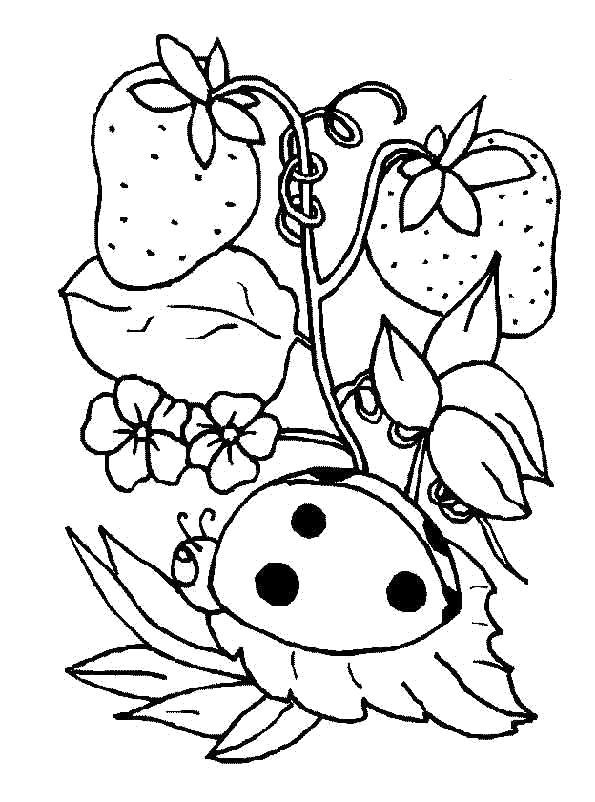 Раскраска клубника. ягоды