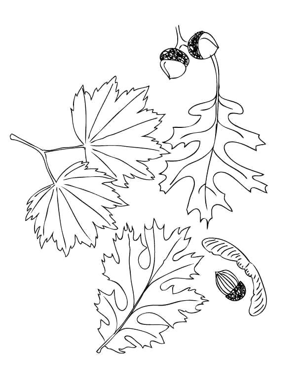 стояло, раскраска осенний букет из листьев распечатать это при