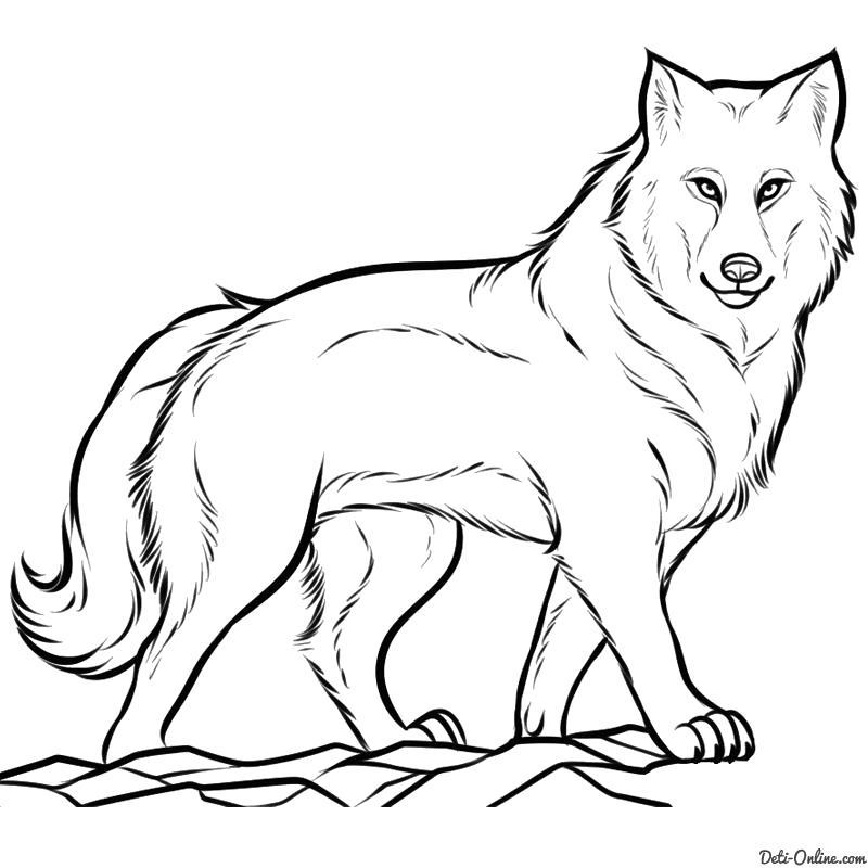 Раскраски волк, Раскраски картинки для всех возростов.