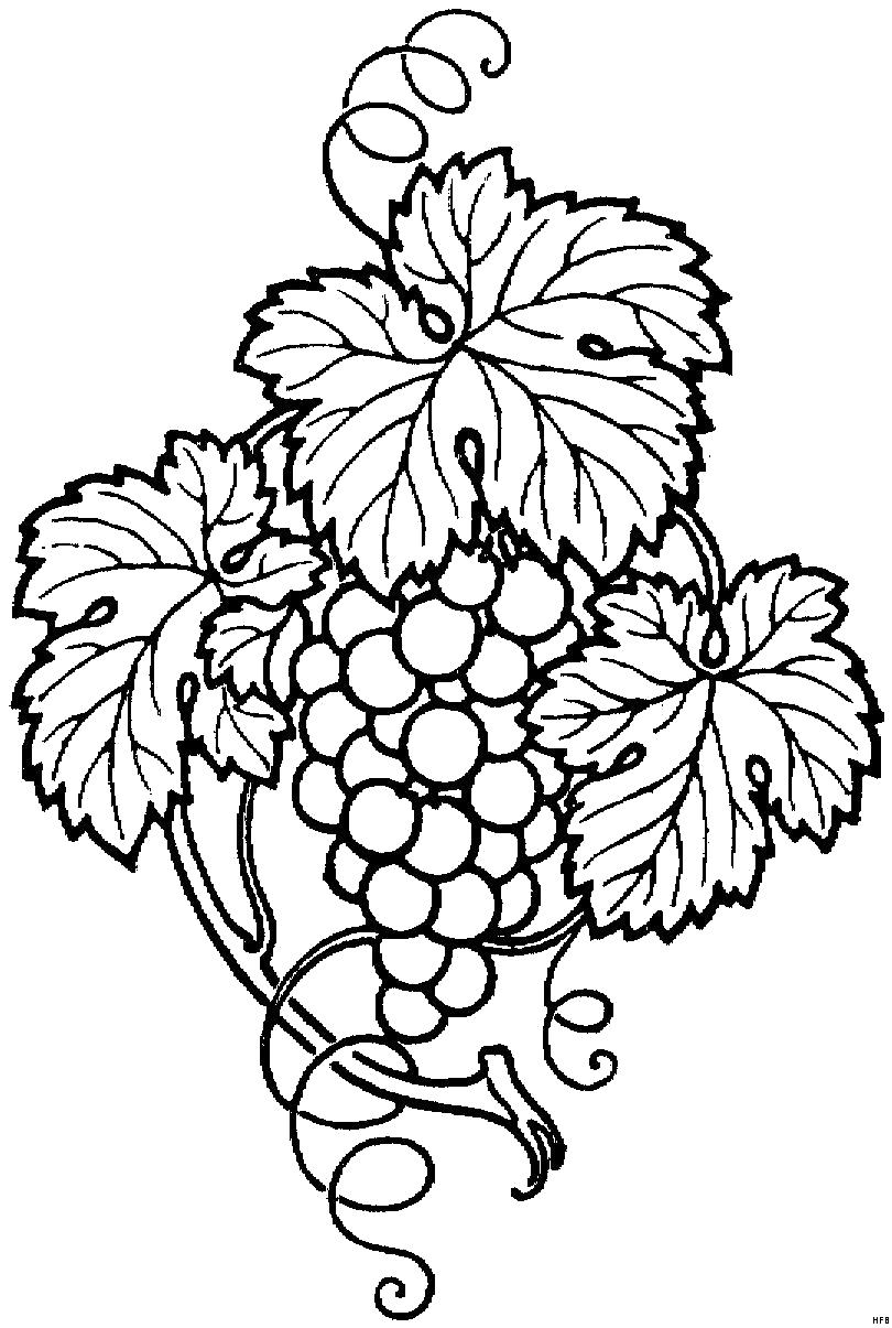 виноград черно белый рисунок апа