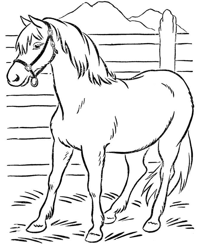 Название: Раскраска Лошадь в загоне. Категория: Домашние животные. Теги: Лошадь.