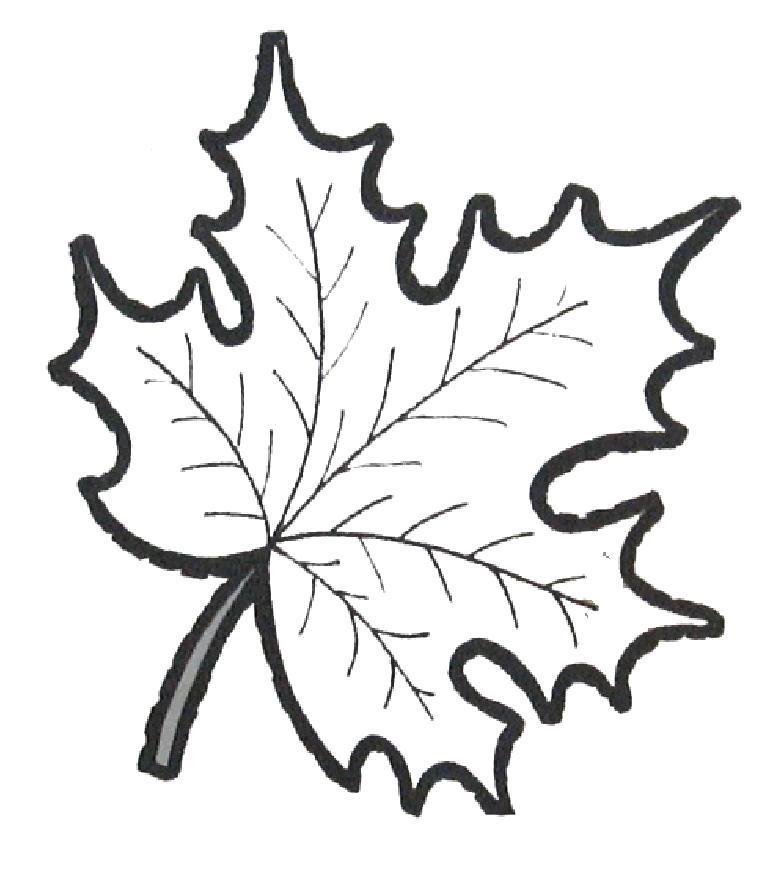 Картинка раскраска осенний лист