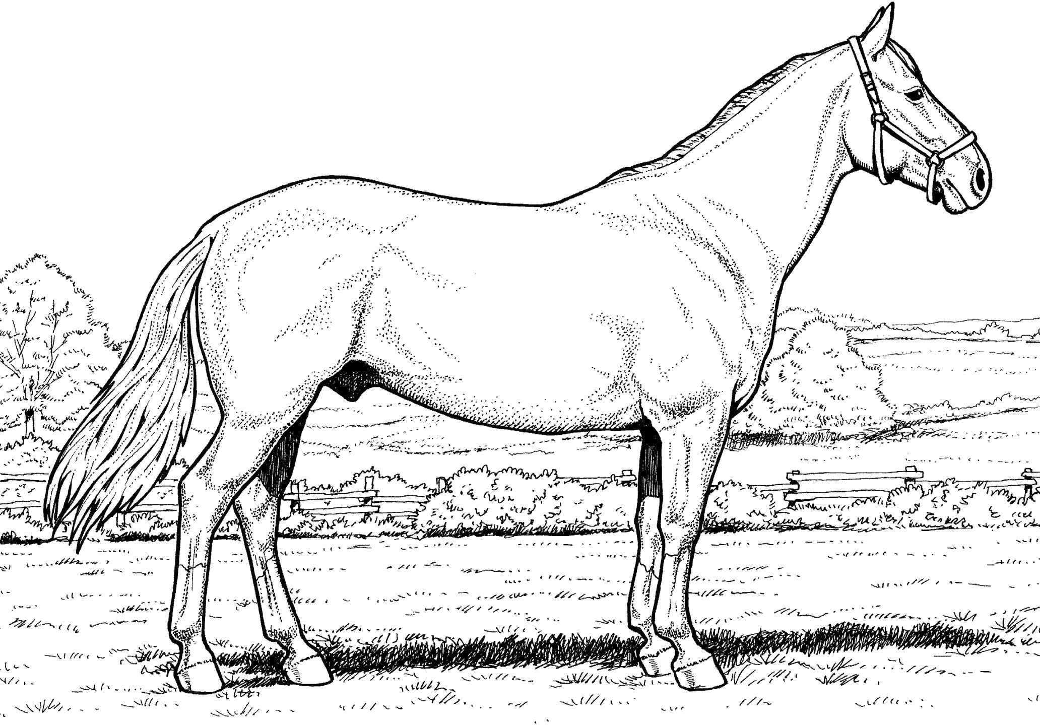 картинки лошади не раскрашенные уникальное устройство