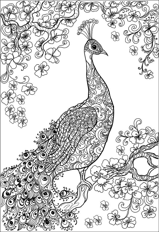 Раскраска  для взрослых, павлин. Скачать птицы, узоры, для взрослых.  Распечатать антистресс