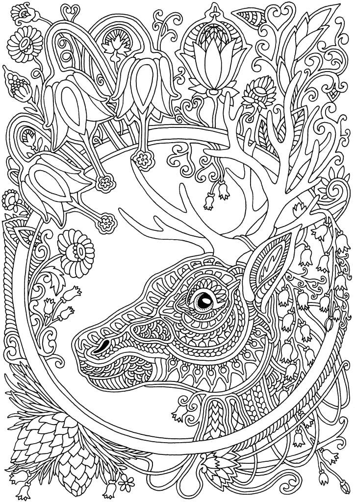 Раскраска олень.
