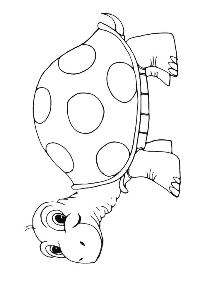 Раскраски Черепаха, Качественные бесплатные раскраски.