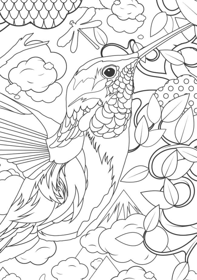 Раскраска Колибри - Раскраски для взрослых. антистресс