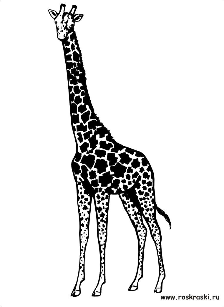 Картинка для распечатки жираф