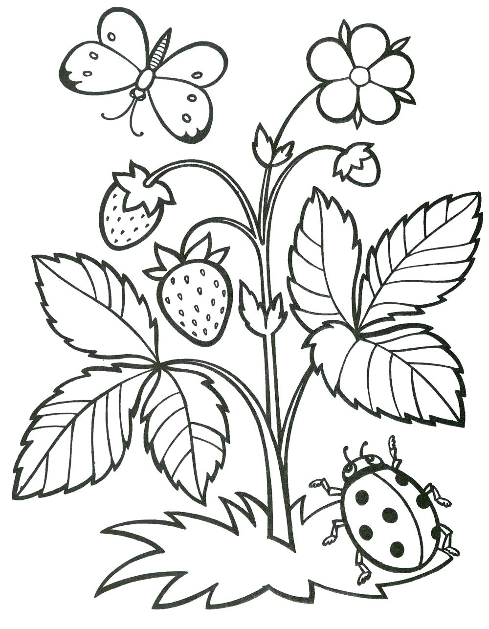 Название: Раскраска Земляника. Категория: ягоды. Теги: земляника.