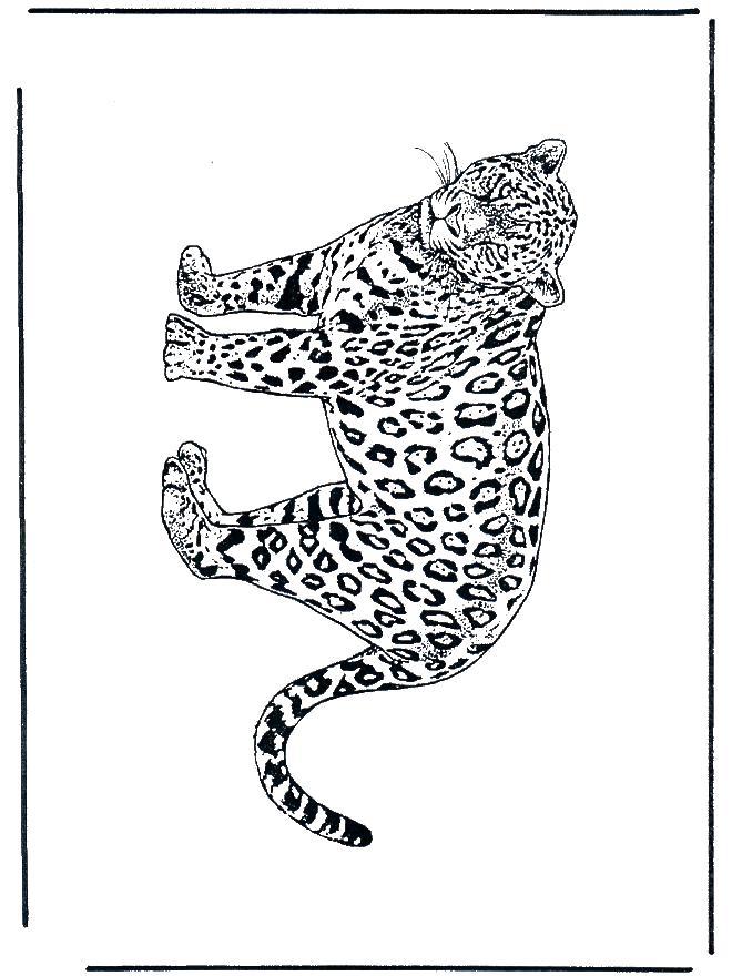Раскраска Леопард Раскраска. леопард